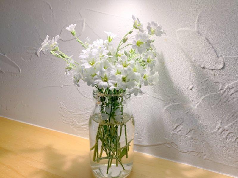 塗り壁の中でも人気の珪藻土