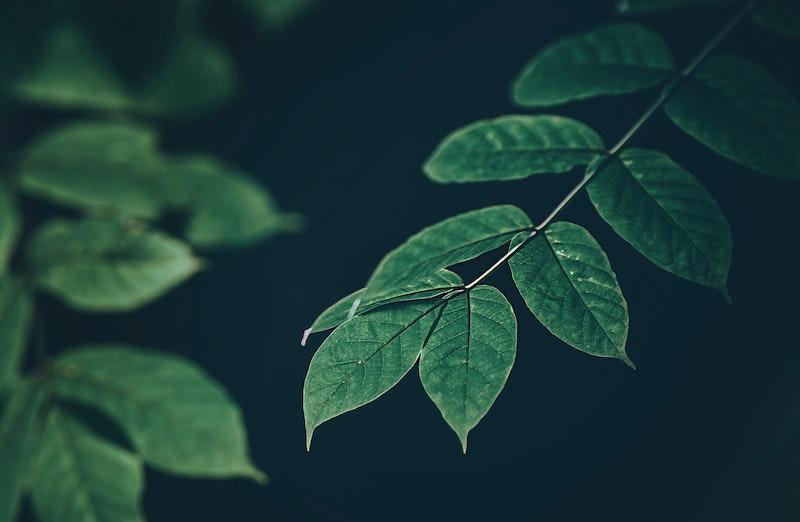 葉っぱも触媒の一つとして考えてもいいと思う