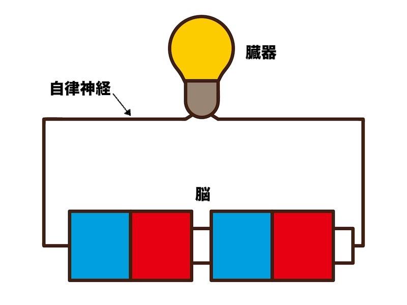 自律神経の役割のイメージ